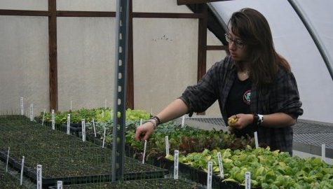 Student Farming Enterprise receives more land, provides additional CSA shares