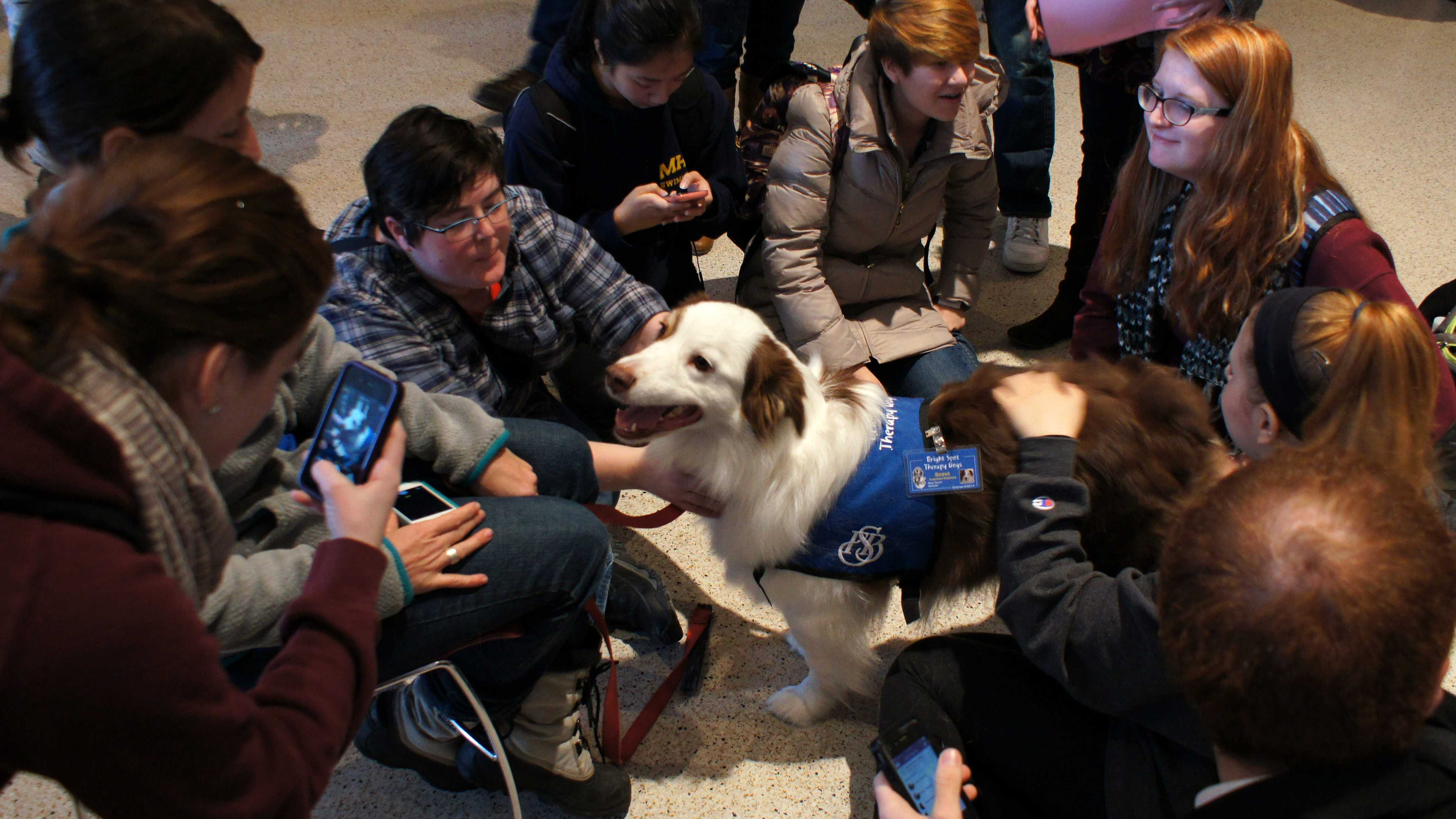 SLIDESHOW: Therapy Dogs at UMass