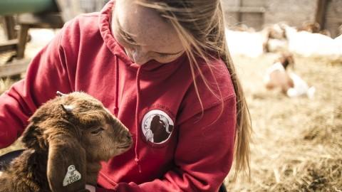 SLIDESHOW: 80th Annual Bay State Livestock Classic