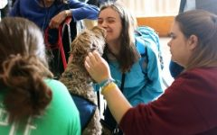 The paws program returned to the UMass campus on Monday April 27 to help student de-stress as finals week approaches. Photo by Robert Rigo.