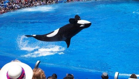 Change in SeaWorld agenda proves need to investigate