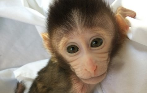 Curious about George: It's time to talk about UMass' secret monkey lab