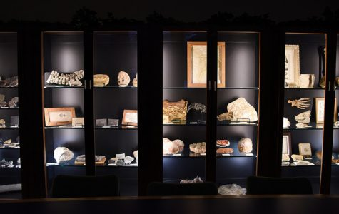 Lawrence Osborn Fossil Collection showcases fossils from across the globe, spanning vast ages