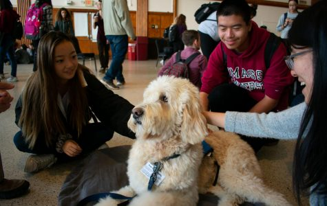 Paws Program brings therapy dogs to brighten a cold week of midterms
