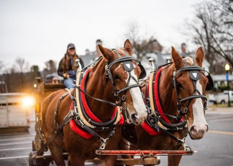 Amherst celebrates the annual lighting of the Merry Maple