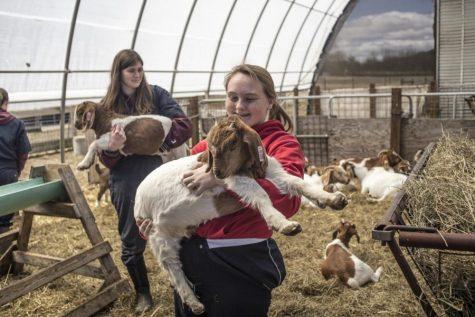 来信:欢迎参加星期六的第八十四届Bay State Livestock Classic活动