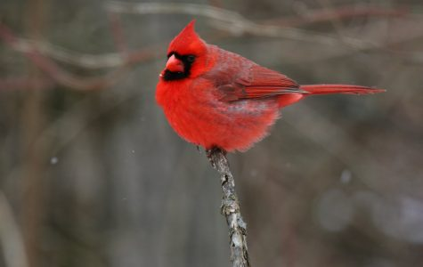 Earth Day: Migratory birds move north due to climate change