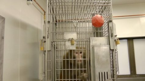 Screenshot from a publicly available video provided by PETA.